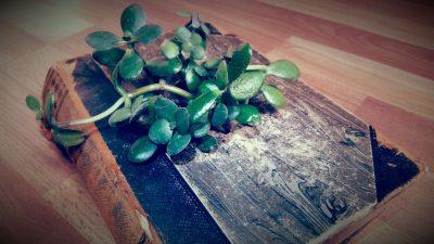 Buchfressende Pflanze